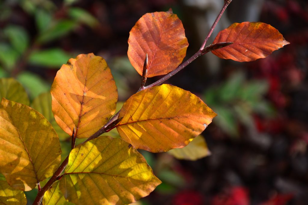 close up of Autumn tree leaves