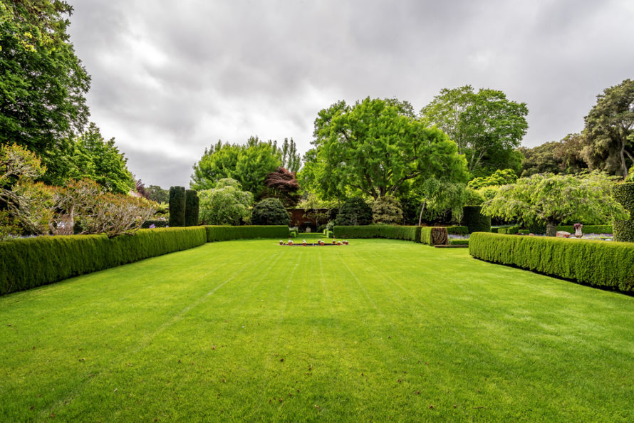 How To Choose What Hedge To Plant In Your Garden Hedging Ie
