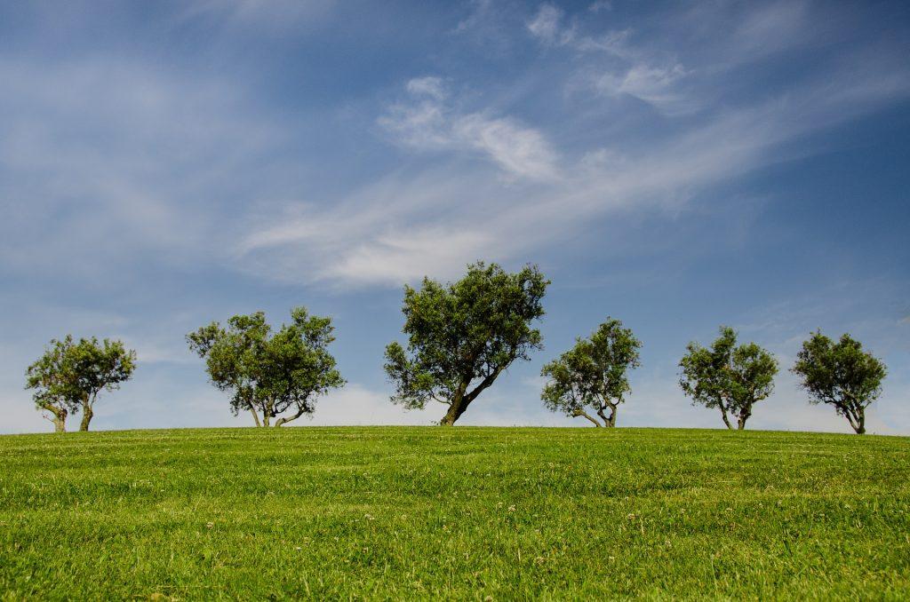 five shelterbelt trees