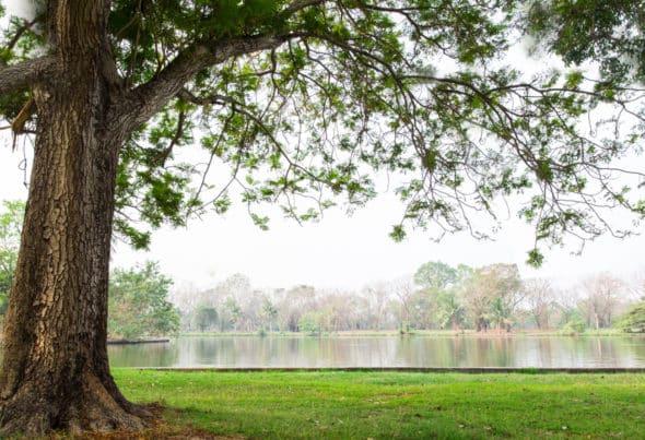 Tree beside lake