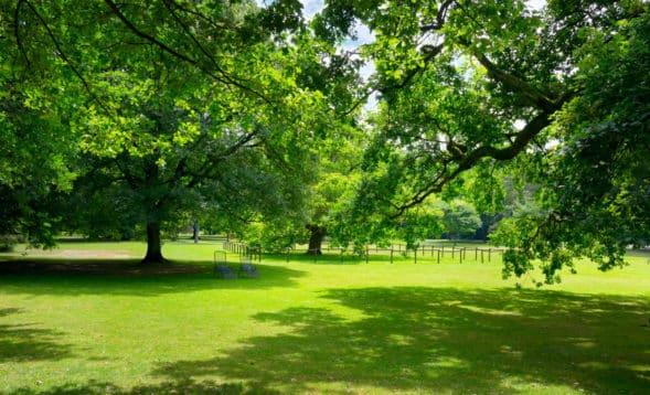 Bright green trees