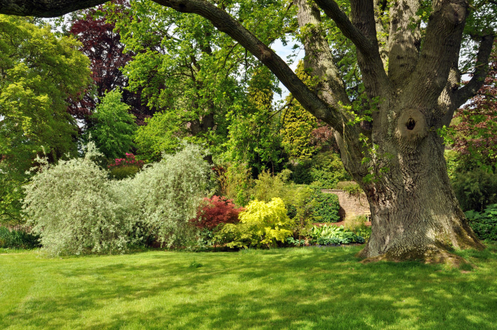 garden tree and bushes